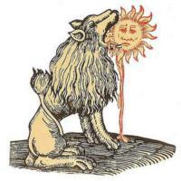 Sunconure11