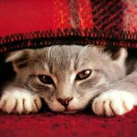 onevcat