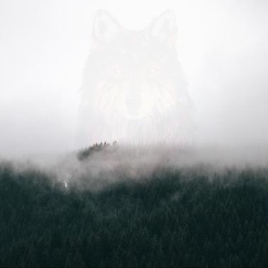 @fogx