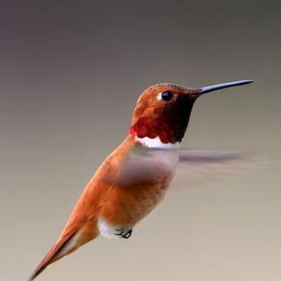@gpproton
