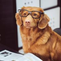NeymarL/ChineseChess-AlphaZero - Libraries io