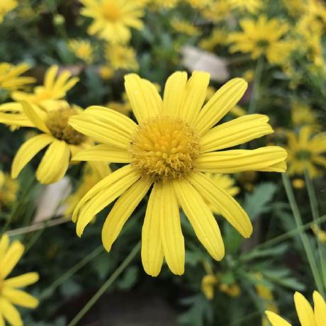 @qiangxinyu