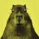 capybara-language