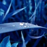 DHI-GRAS logo