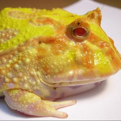 SpaceToad