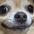 samlee405's avatar