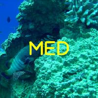 @micronesia-reef-monitoring