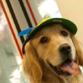 data-pup