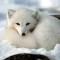 @icy-arctic-fox