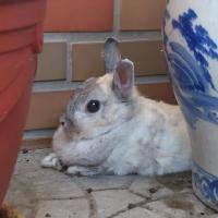 hare1039