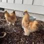 @yellowman