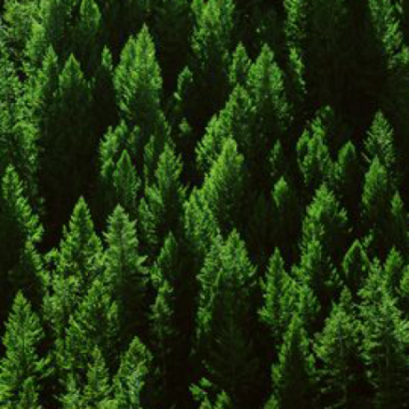 RecursiveForest