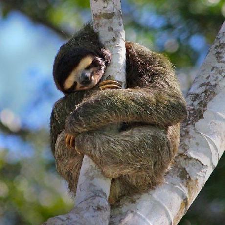 @st-sloth