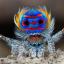 @Tiny-Spider