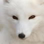 @arthur-fox