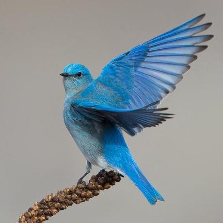 BlueWonders
