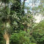 Arboreta logo