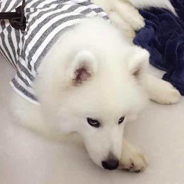 KHW Snow Fox Tra/îneau Mixte Jeunesse
