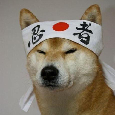 @satoshi-ninja