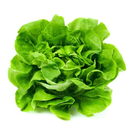 @delirious-lettuce