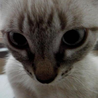 Ludmilla profile image