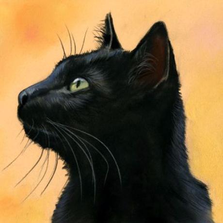 Minghao Shan's avatar