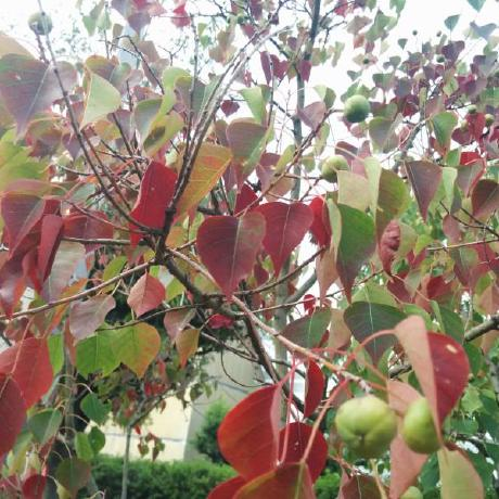 @openandclose