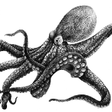 Octopussy-Project logo