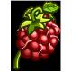 wineberrypi