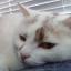 @Mia-The-Coding-Cat