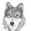 @old-greywolf