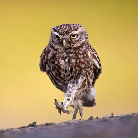 owlwalks