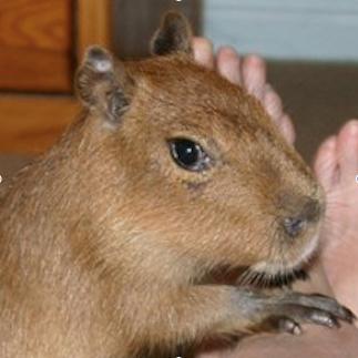 capybaralet