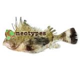 neotypes logo