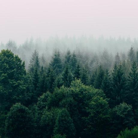 bhtru