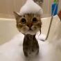 @AtomicLemon