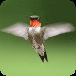 birdie-github