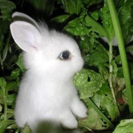 thewhiterabbit