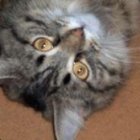 sevenseacat