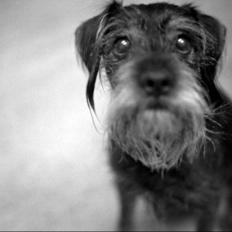 @beardeddog