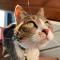 @murph-cat