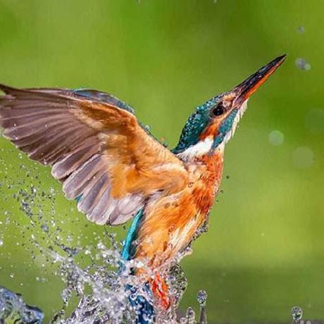 Justin Hager profile image