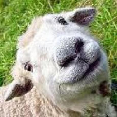 sheepsy90