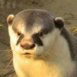 @Otter-man