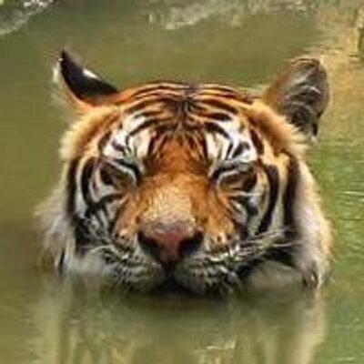 tiger4th
