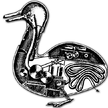 anatidae, Symfony organization