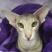 @I-Cat
