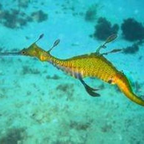 starfishmod