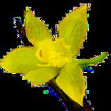 vanillasource logo